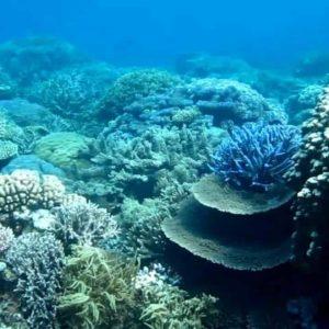 snorkeling-windswell-kitesurfing-port-douglas-australia